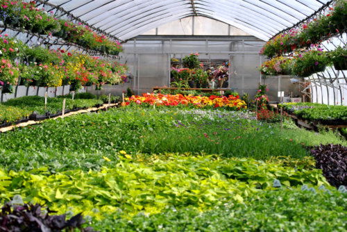 Grower Supply & Nursery Supply in Colorado & Wyoming