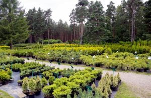 Selecting water efficient plants