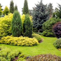 Water Efficient Planting